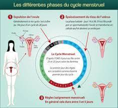 Qu'est-ce que les règles et le cycle menstruel?