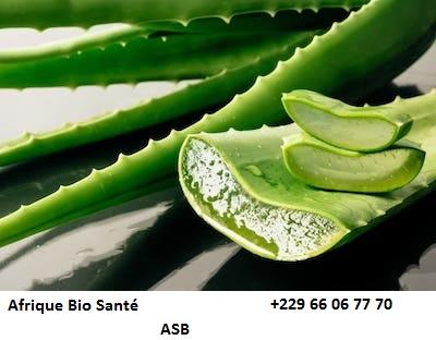 Aloe Vera : la plante aux mille vertus